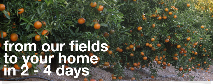 From our fields to your home in 2-4 days